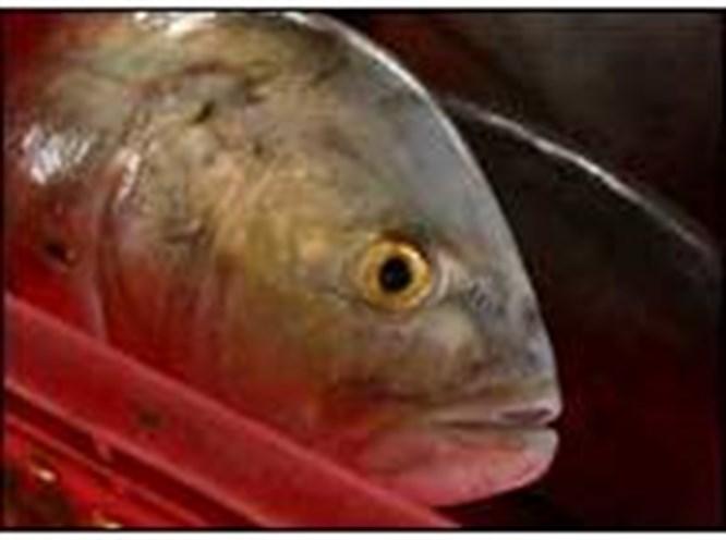 Bu balık acaba taze midir?